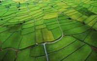 风景图片高清绿色草原护眼组图